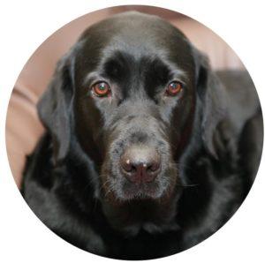 Rosie Dog
