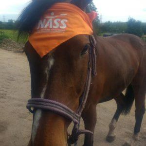 Horse in NASS bandana